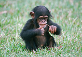 CHI 05 GR0002 01