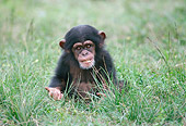 CHI 05 GR0003 01