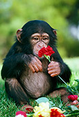 CHI 05 RK0006 04