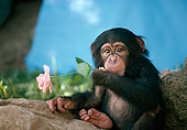 CHI 05 RK0007 06