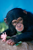 CHI 05 RK0007 16