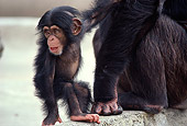 CHI 05 RK0009 01