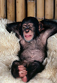 CHI 05 RK0023 02