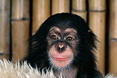 CHI 05 RK0026 07