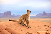 COU 01 AC0009 01