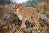 COU 01 BA0002 01
