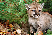 COU 01 BA0003 01