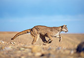 COU 01 GL0001 01