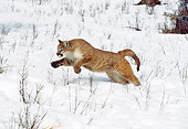 COU 01 GL0004 01