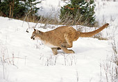 COU 01 GL0007 01