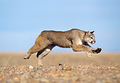 COU 01 GL0009 01