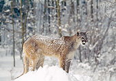 COU 01 GL0010 01
