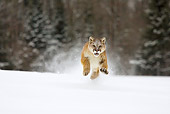COU 01 KH0001 01