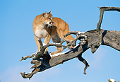 COU 01 KH0006 01
