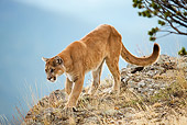 COU 01 MC0007 01