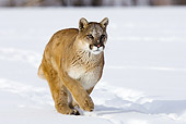 COU 01 MC0009 01