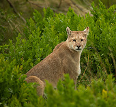 COU 01 MC0011 01