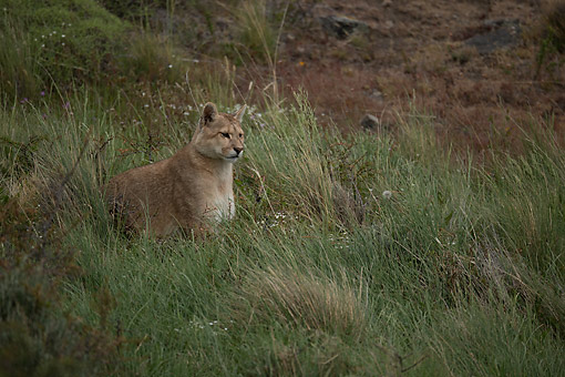 COU 01 MC0012 01