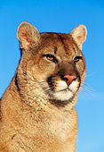 COU 01 RK0015 02
