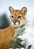 COU 01 RK0061 03
