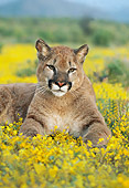 COU 01 RK0067 34