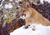 COU 01 RK0115 02