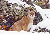 COU 01 RK0116 05