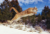 COU 01 RK0188 07