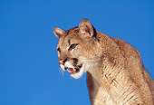 COU 01 RK0219 03