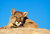COU 01 RK0261 05