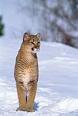 COU 01 TL0007 01