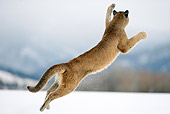 COU 01 WF0001 01