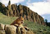 COU 01 DB0003 01