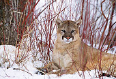 COU 01 DB0014 01
