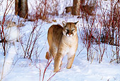 COU 01 DB0015 01
