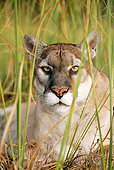 COU 01 LS0001 01