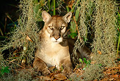 COU 01 LS0002 01