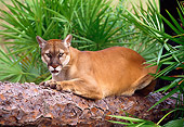 COU 01 LS0004 01
