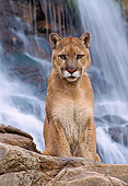 COU 01 NE0001 01