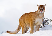 COU 01 NE0003 01