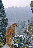 COU 01 NE0005 01