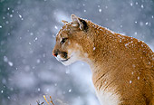 COU 01 NE0006 01