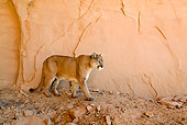 COU 01 NE0008 01