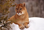 COU 01 RK0169 03