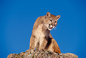 COU 01 RK0216 02