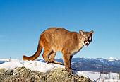 COU 01 RK0222 13