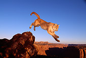 COU 01 RK0307 07