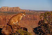 COU 01 RK0362 01