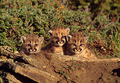 COU 01 RW0008 01