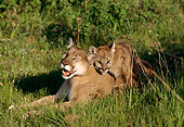 COU 01 TK0003 01